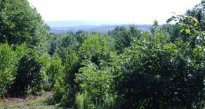 25.5 Acres Land in Shickshinny