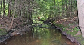 106 +/- Acres, Land- Great Hunting Property