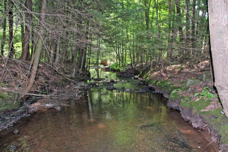 55+/- Acres, Wooded Land with Streams
