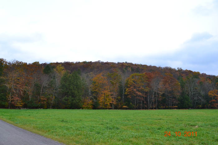 24  /- Wooded Acres