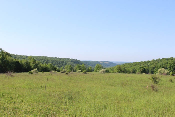 15 +/- Acres of Land in Benton, PA