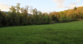 11.6 Acres of Land