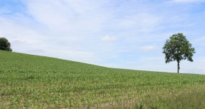 23+/- Acres,  BLOOMSBURG