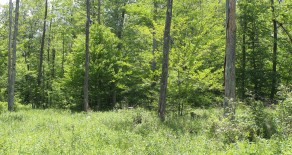 132+/- ACRES OF LAND