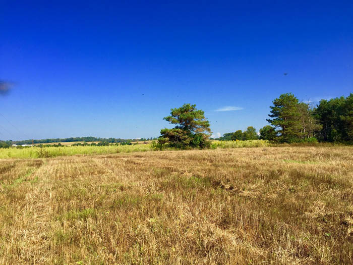 24 +/- Acres Land for Sale in Stillwater