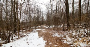 26+/- Acres of Land in Northumberland
