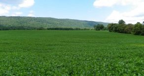 78 Acres Land in Dauphin County