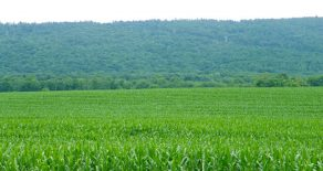 251 Acres Land for Sale in Dauphin County