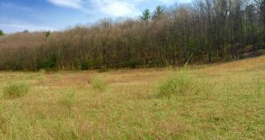 43+/- Acres Land, Well & Septic