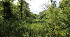 68 +/- Acres Land in Muncy
