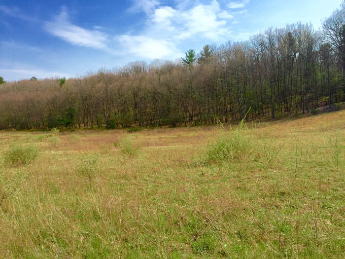 23+/- Acres, Land, Millville Area