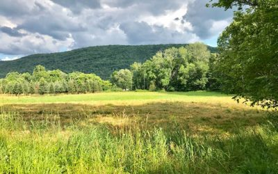 9 Acres of Land with Creek