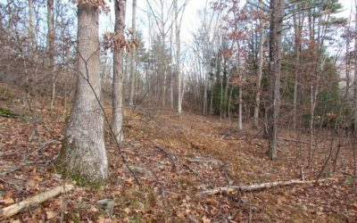 12 +/- Acre Wooded Building Lot