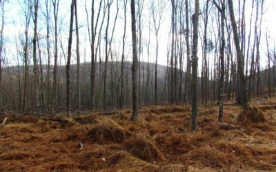 32 +/- Acres Woodlands