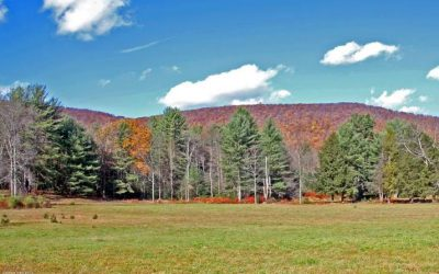 56+/- Acres, Wooded Land with Streams