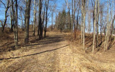 36+/- Acres of Prime Wildlife Habitat