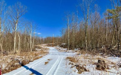 143 Wooded Acres with Views Adjoins Game Lands